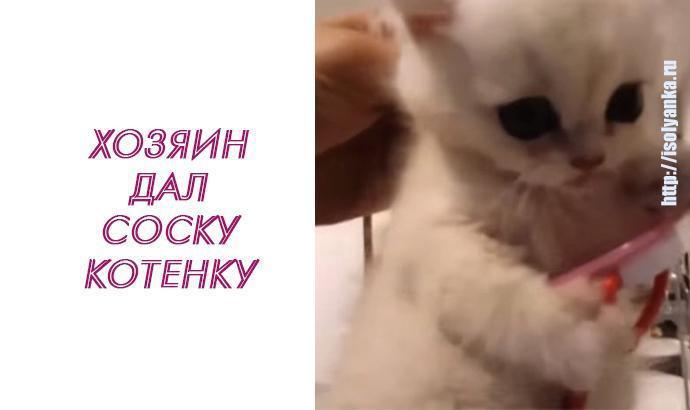 Посмотрите, что сделал этот котенок, когда хозяин попытался его обидеть! | 2