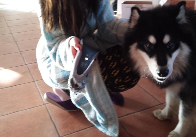 Когда пес погрыз туфли его подруги парень не растерялся... Посмотрите, что он сделал!