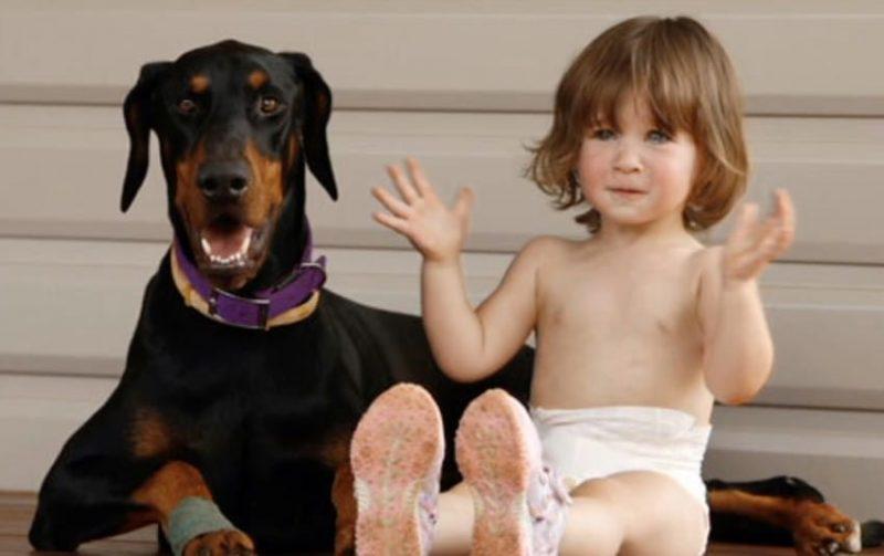 Девочка играла с доберманом, вдруг пес оскалился и зарычал...