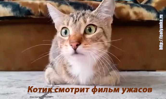 Котик решил посмотреть фильм ужасов. Его реакция просто незабываема! | 99