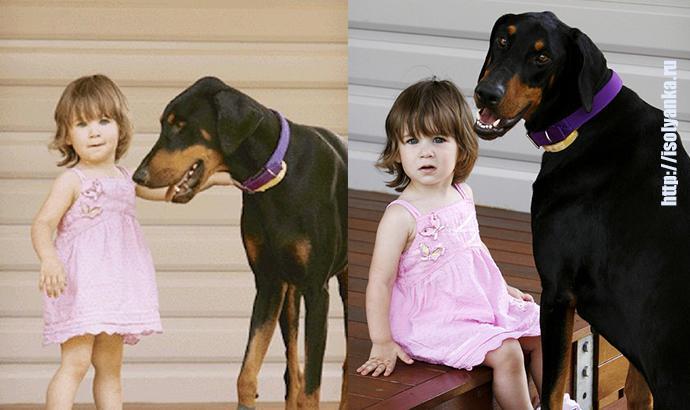 Девочка играла с доберманом, вдруг пес оскалился и зарычал...   1