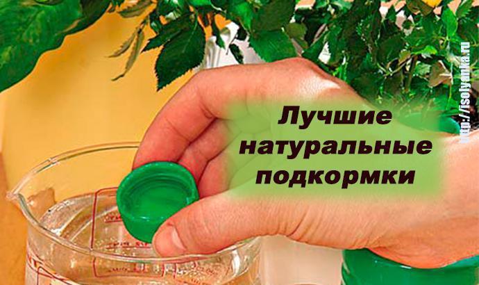 Подкормки для комнатных растений без химикатов!