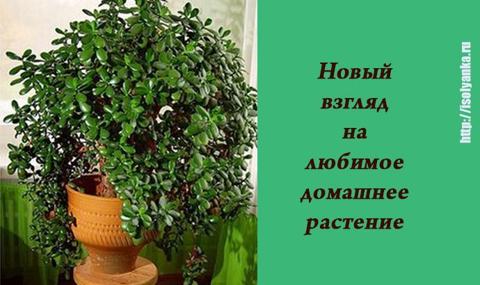 У каждого есть это растение, но не все знают о его ЛЕЧЕБНЫХ свойствах! | 7