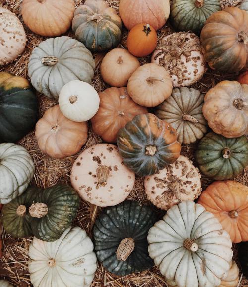 Как выбрать овощи и фрукты без нитратов?