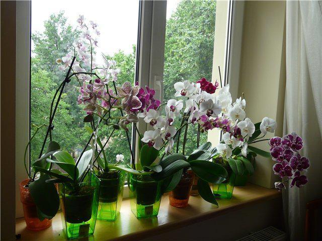 Вот почему нельзя держать орхидею дома!   2
