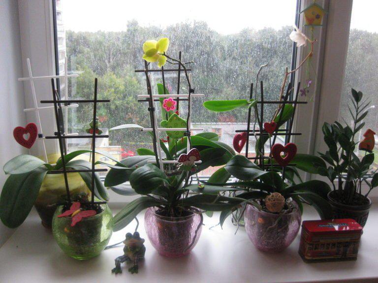 Вот почему нельзя держать орхидею дома!   3