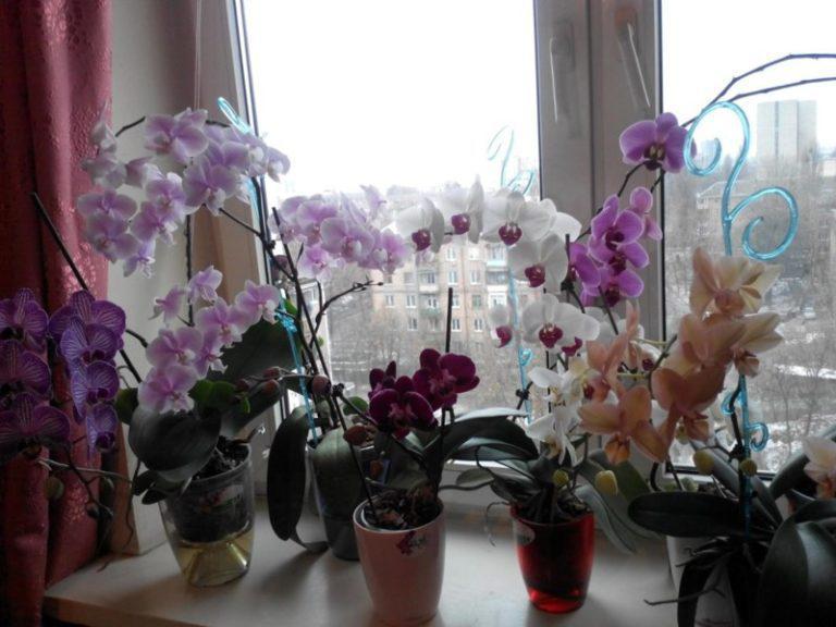 Вот почему нельзя держать орхидею дома!   1