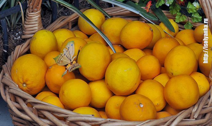 Что произойдет, если положить пару лимонов на тумбочку у кровати? Лайфхаки, которые перевернут жизнь! | 1