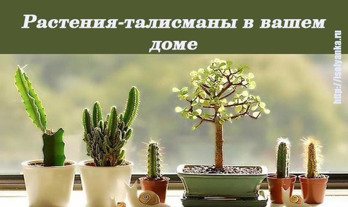 Узнайте какое растение может стать вашим талисманом, притягивающим удачу и богатство!