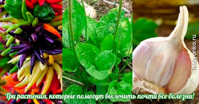 Три растения, которые помогут вылечить почти все болезни! | 30