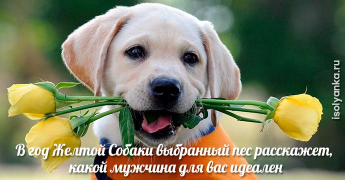 В год Желтой Собаки выбранный пес расскажет, какой мужчина для вас идеален | 15