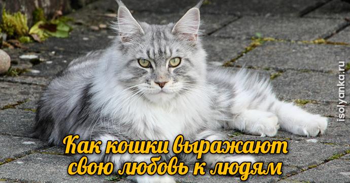 Как кошки выражают свою любовь к людям: 10 оригинальных способов | 1