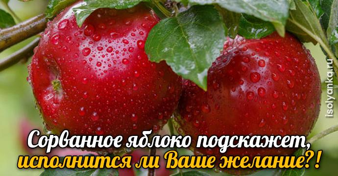 Сорванное яблоко подскажет, исполнится ли Ваше желание?! | 16
