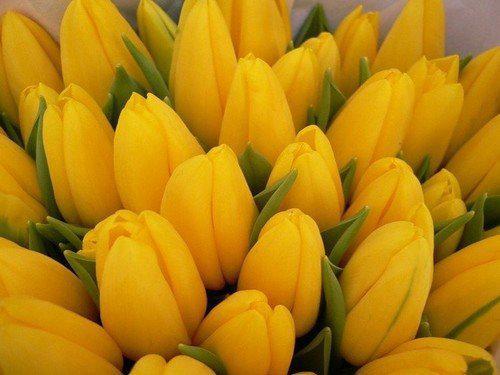 Какой цвет приносит удачу в зависимости от знака Зодиака!