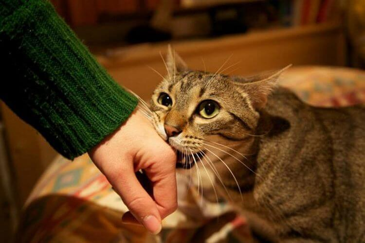 Как кошки выражают свою любовь к людям: 10 оригинальных способов
