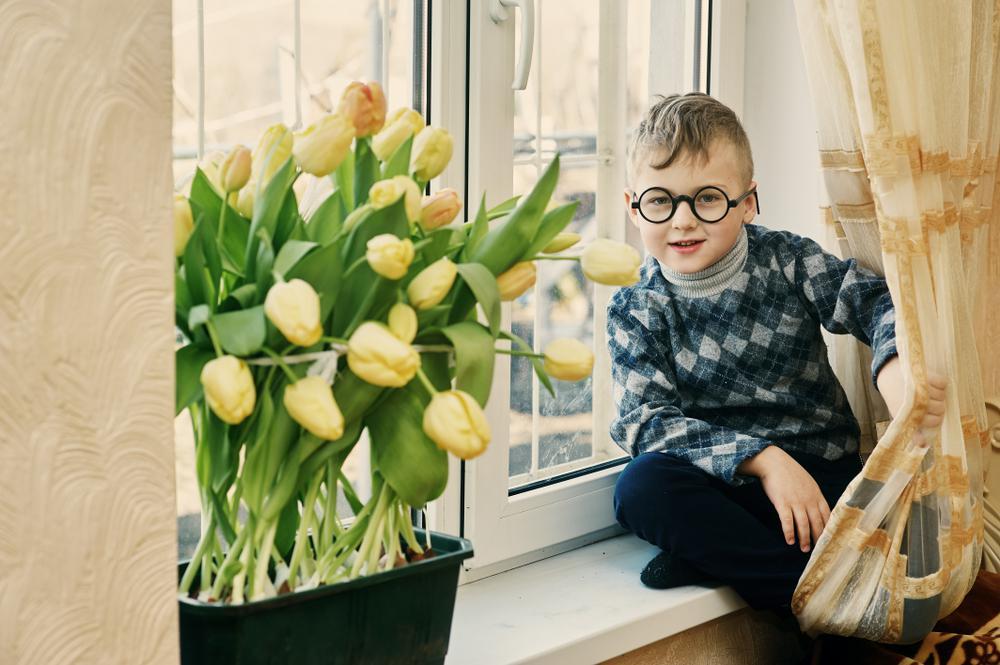 Как вырастить тюльпаны на подоконнике без грунта | 1