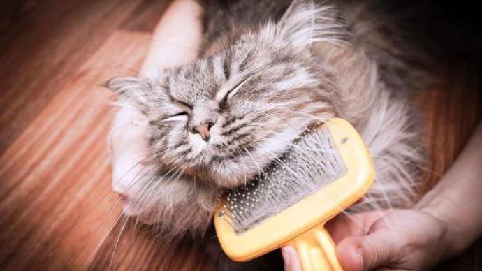 Виды и назначение расчесок для кошек